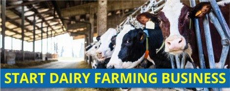 WANT TO SET UP A DAIRY FARM?